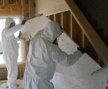 Albuquerque Mold Removal
