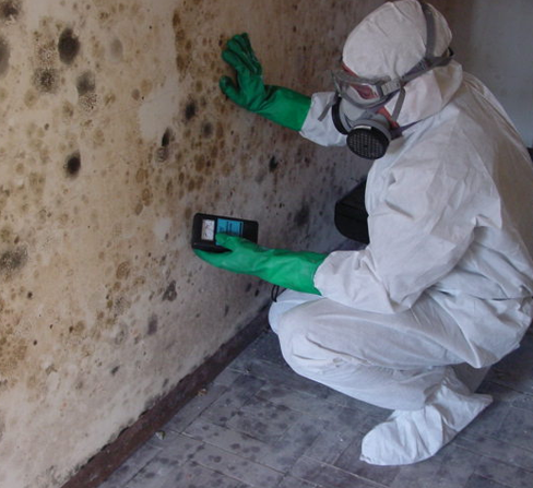 Albuquerque Mold Inspection