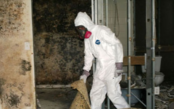 Albuquerque Mold Remediation