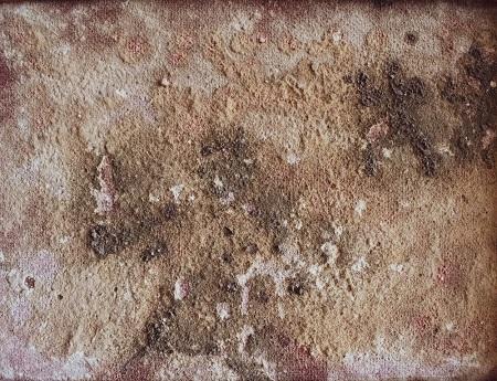 Albuquerque Mold Removal