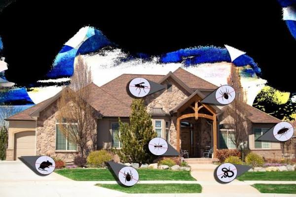 Pest Control Buffalo NY
