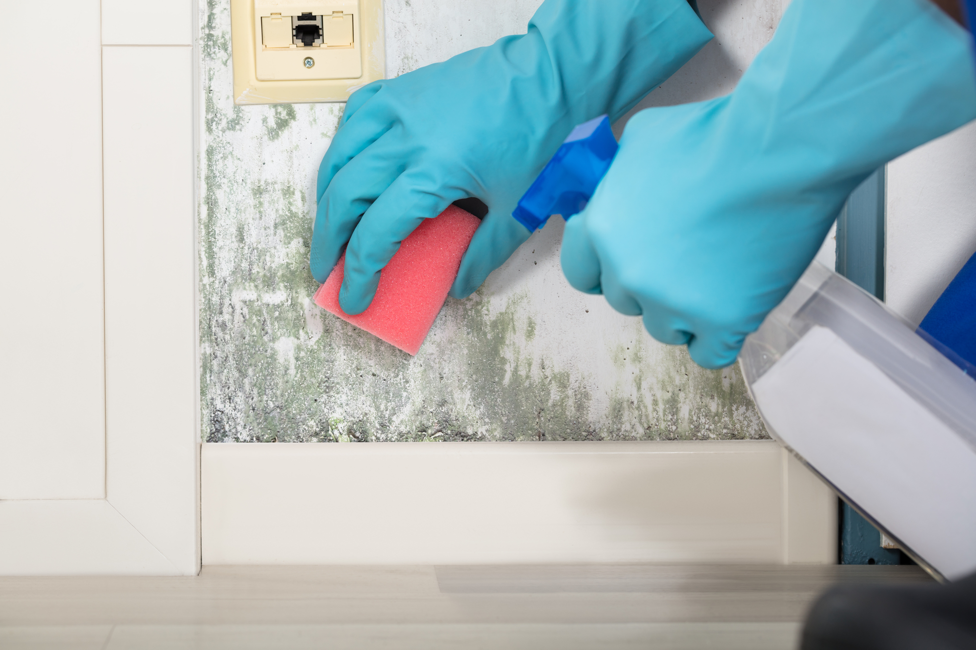 A PROFESSIONAL MOLD REMOVAL SERVICE IS A GOOD INVESTMENT AND THE BEST WAY TO PROTECT ALL KINDS OF PROPERTIES