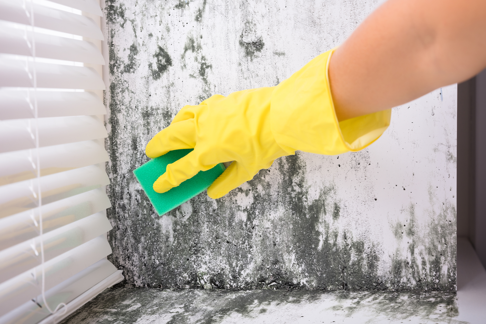 MOLD COMPANY STAYS UPDATED IN ORDER TO PROVIDE THE MOST PROFESSIONAL SERVICE TO ITS CUSTOMERS