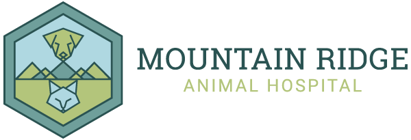 Mountain Ridge Animal Hospital Announces Half-Day Free Trials for Dog Daycare in Lafayette CO