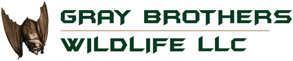 Gray Brothers Wildlife Offers 24/7 Emergency Wildlife Removal in Connecticut