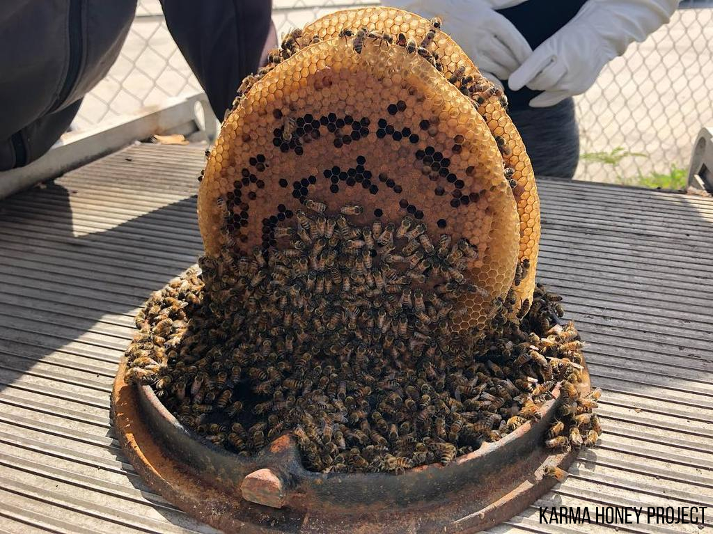 The Karma Honey Project is Saving the Bees in Puerto Rico