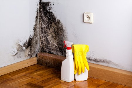 Mold Remediation Should Be Dealt With By Qualified Individuals