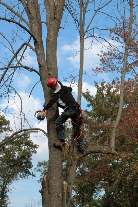 Allison Tree Service Warns Of The Dangers Of Tree Damage