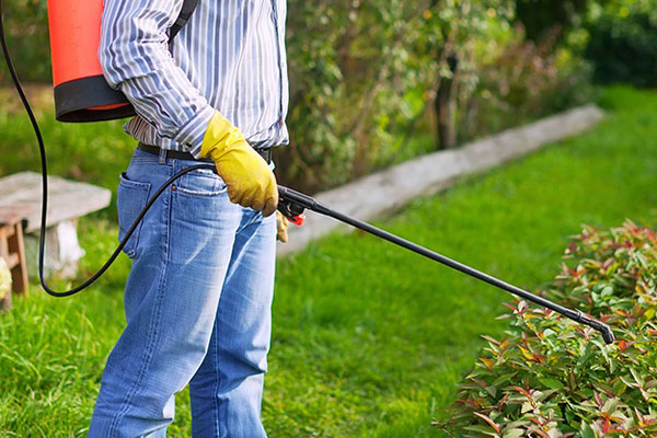 Pest Prevention Services Available in Minneapolis