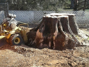 Allison Tree Service Introduces New Stump Removal Technique