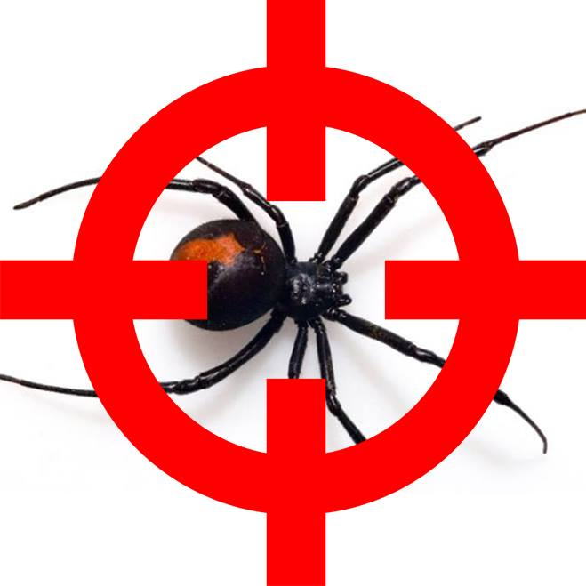 Pest Control Southside Offers a Price Discount to Seniors on All Pest Control Services Offered in South Brisbane