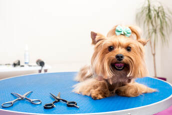 Choose Best Grooming Services at Mobile Pet Grooming Miami