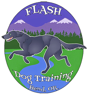 Flash Dog Training Continues To Offer All Training Programs during Lockdown