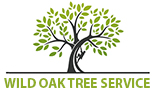 Austin Tree Services, a Leading Tree Care Company in Austin has Recently Launched a New Website