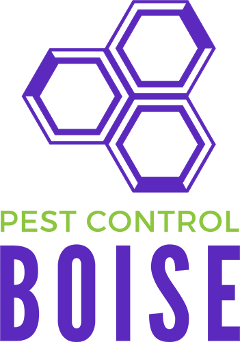 Pest Control Boise Now Offering Rodent Removal