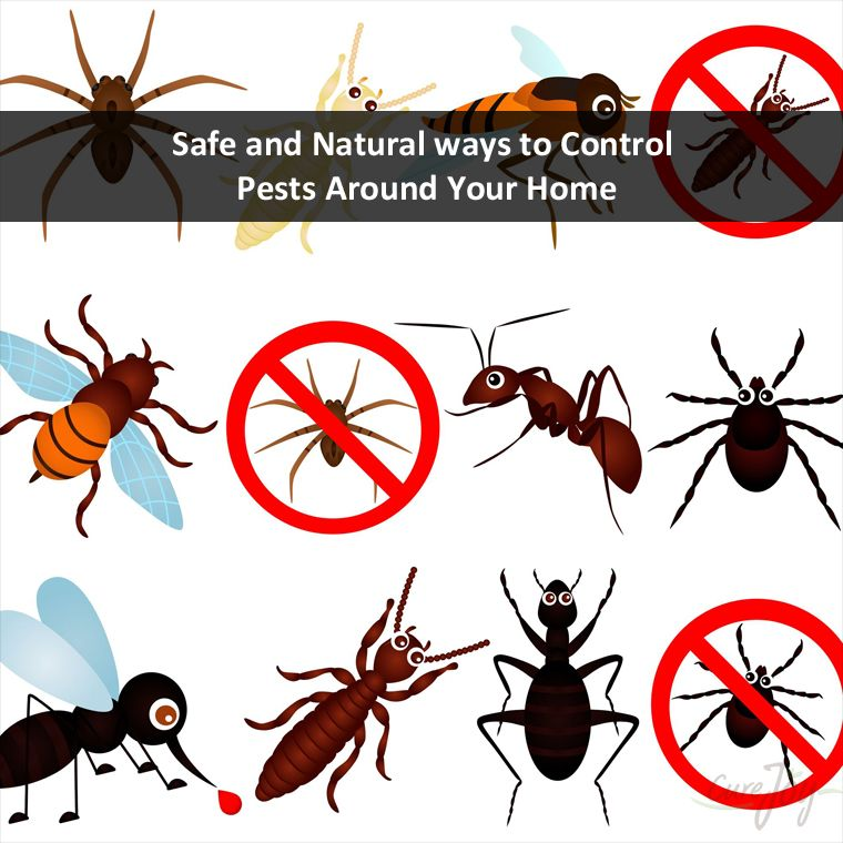 Six Brothers Pest Control Issues an Ultimate Guide on Natural Ways To Control Pests