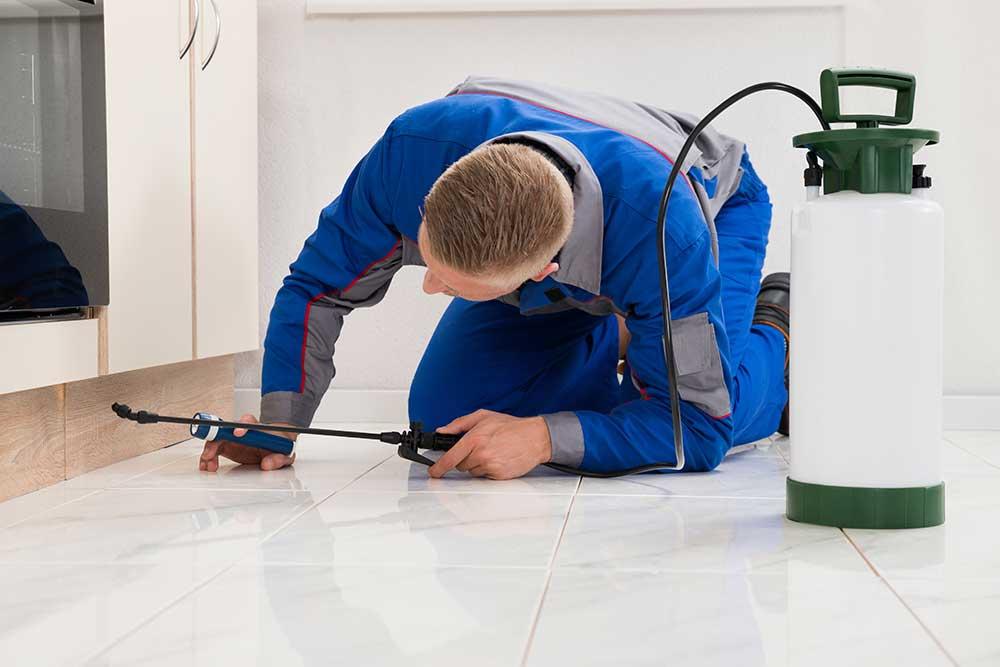 Pest Control Boise Declares Top Nuisance Pests