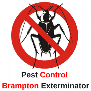 Pest Control Brampton Exterminator is Operating Safely to Remove Pests in Brampton, ON