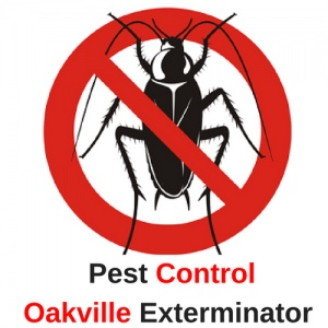 Pest Control Oakville Exterminator is Operating Safely to Remove Pests in Oakville, ON