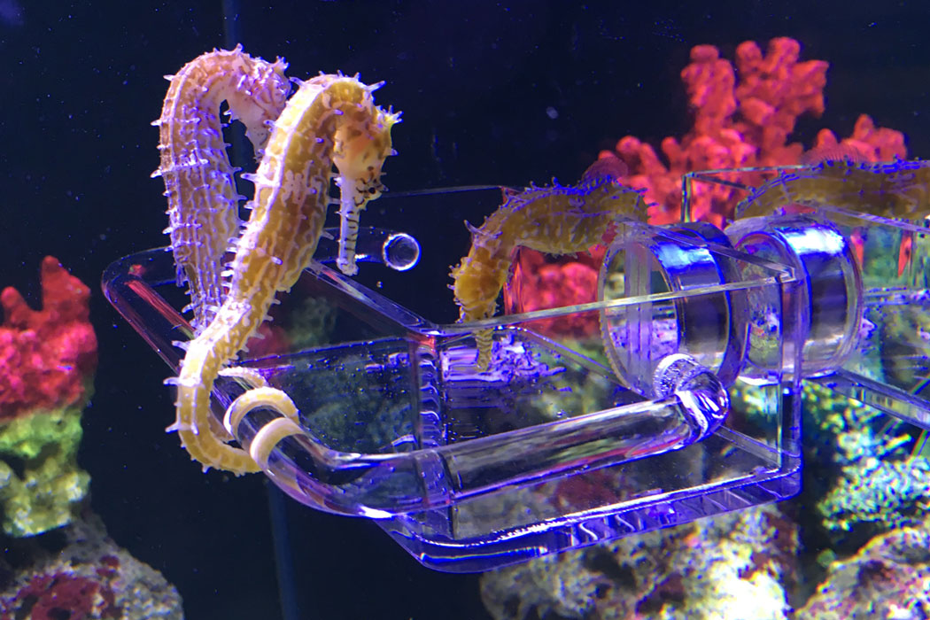 Salty Glasses Designs Premium Seahorse Feeder System for Clean and Tidy Feeding