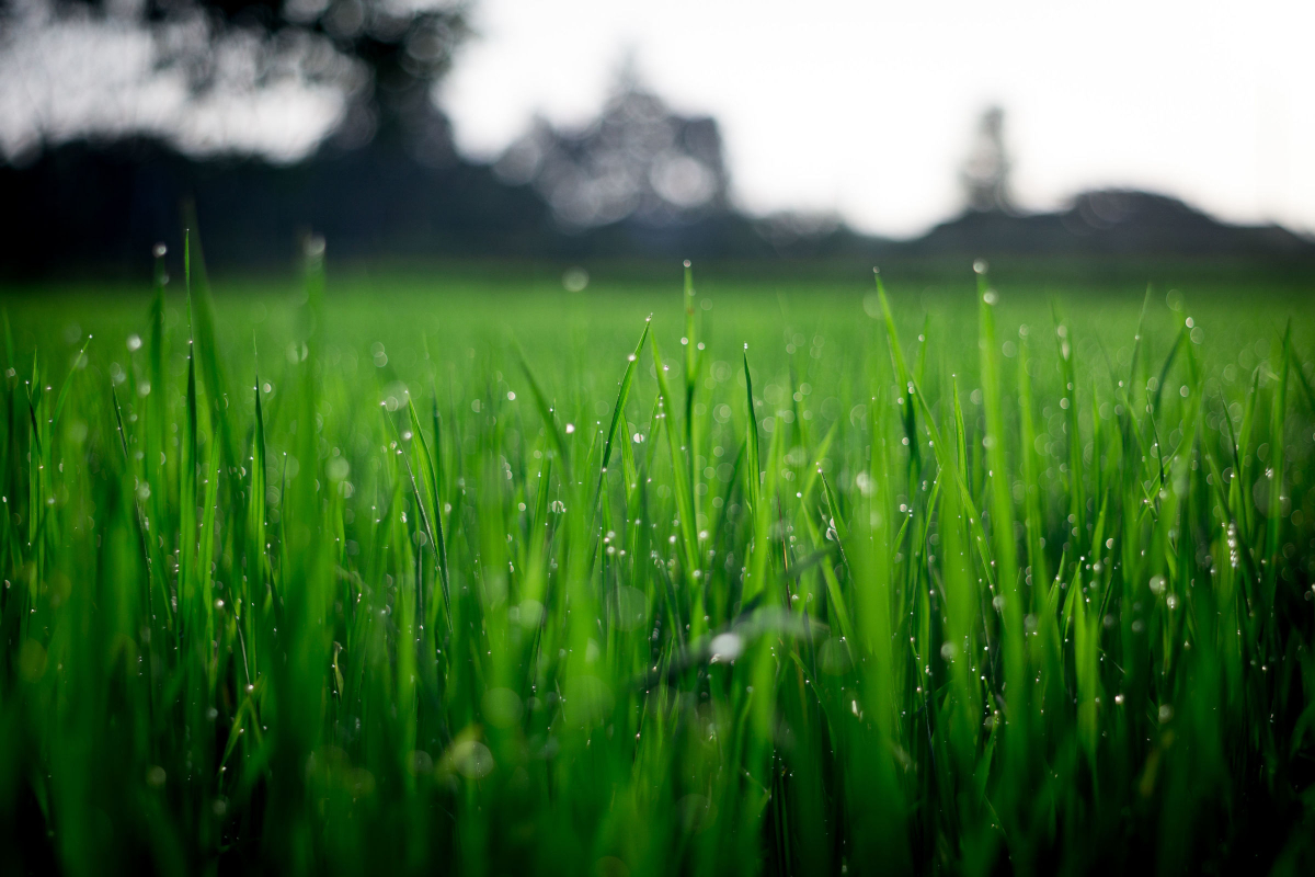 It is Vital to Know How Much Water Sod Needs and When to Water It