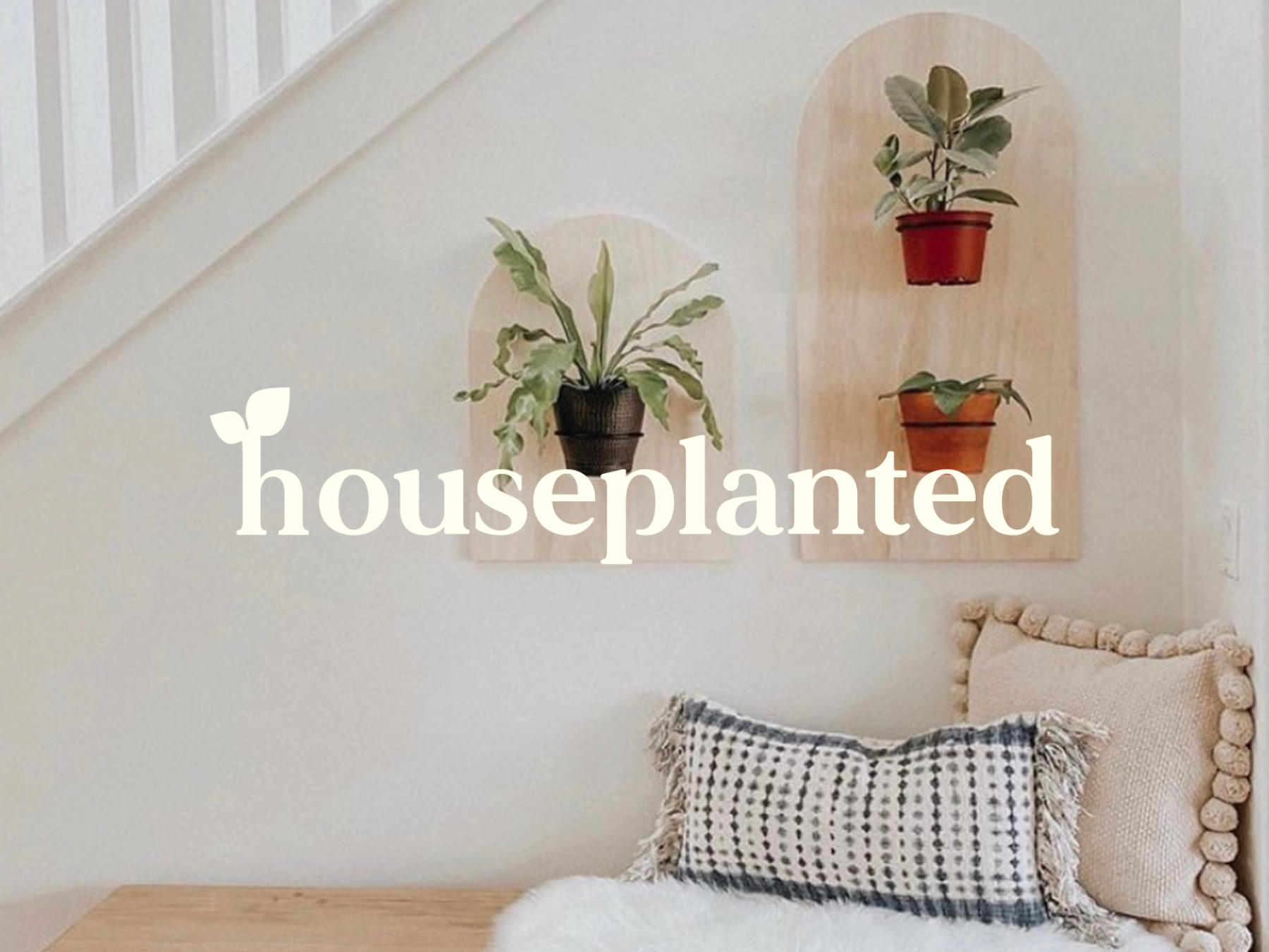 Family Owned Online Business, Houseplanted Delivers Popular Indoor Plants Nationwide