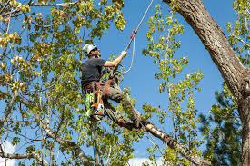 San Antonio Tree Removal Service Now Offering Professional Tree Removal Services