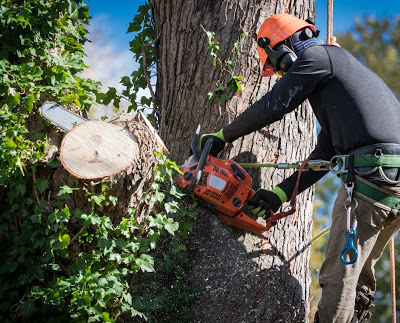 North Florida Tree Service Now Offering Free Estimates