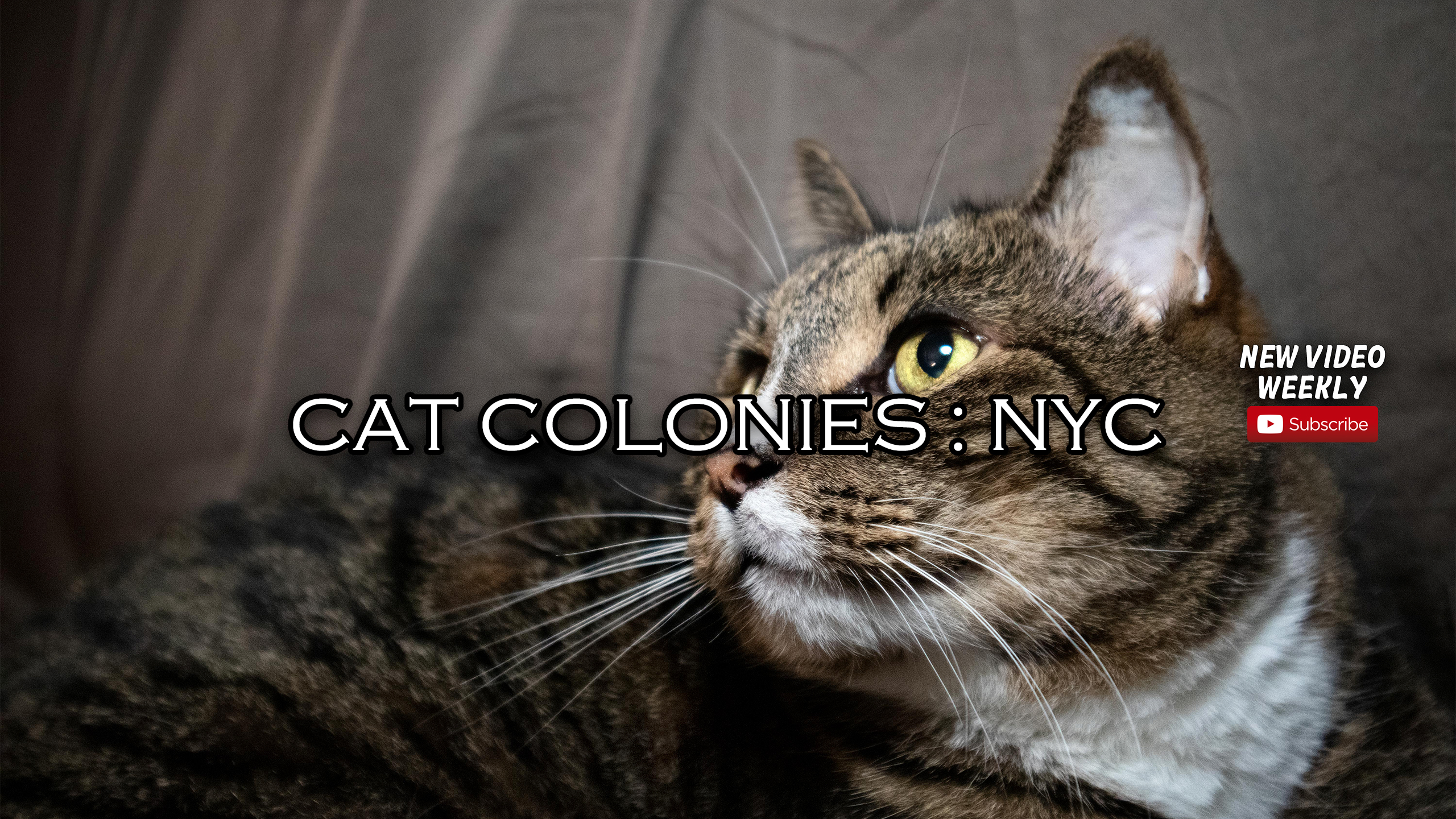 """Cat Colonies"" Highlight the Plight of NYC Cat Colonies and Efforts of Samaritans to Rescue Them"
