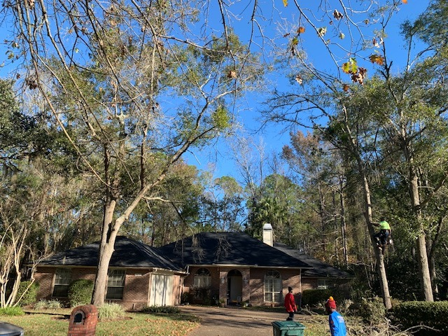 North Florida Tree Service Launches 24/7 Emergency Tree Service in Jacksonville