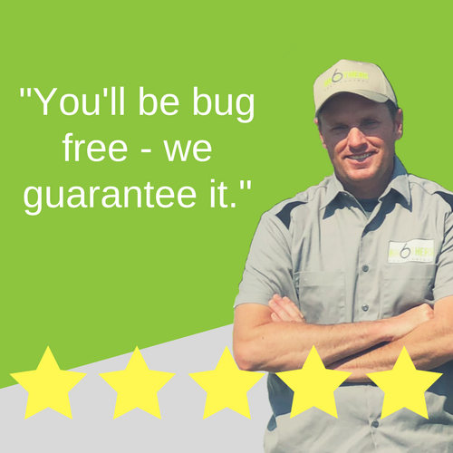 Six Brothers Pest Control Expands Bed Bug Control Services in Nevada