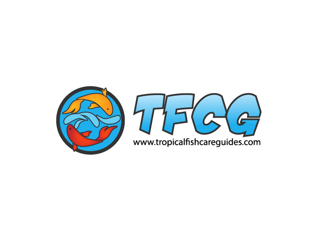 Tropical Fish Care Guides is the Ultimate Online Resource for Beginners