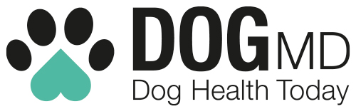 Huge Increase In Demand For Online Vet Consultation Services By Dog Owners