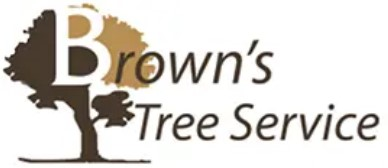 Fort Worth Tree Service Experts in Fort Worth, TX Announces the Launch of Its Newly Rebuilt Website Featuring All Tree Services