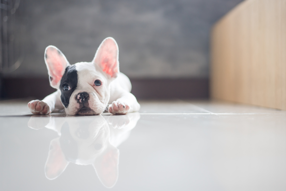 Flooring Liquidators Sharing 2 Best Flooring Options For Pet Owners