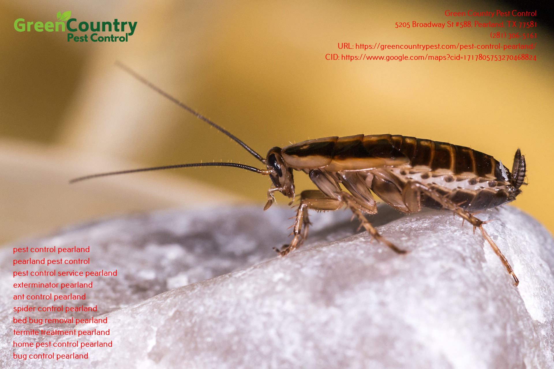 Green Country Pest Control Are Offering A Pest Free Guarantee