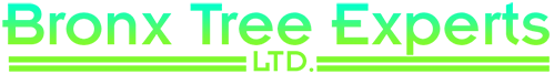 Contact Bronx Tree Pro - Tree Removal, Cutting & Trimming Service for All Tree Services in The Bronx