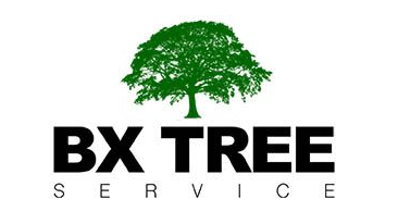 BX Tree Service - Bronx Tree Company, Tree Cutting & Removal, BX Tree Service: For All Customers' Tree Service Needs in The Bronx, New York
