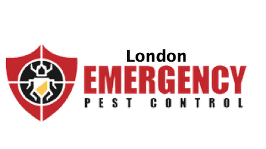 London Emergency Pest Control is the Company that can Solve All Pest Problems in London, Ontario