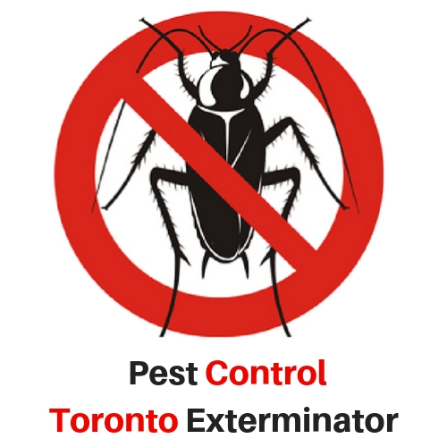 Pest Control Toronto Exterminator is the Top Rated Pest Control Company in the Area