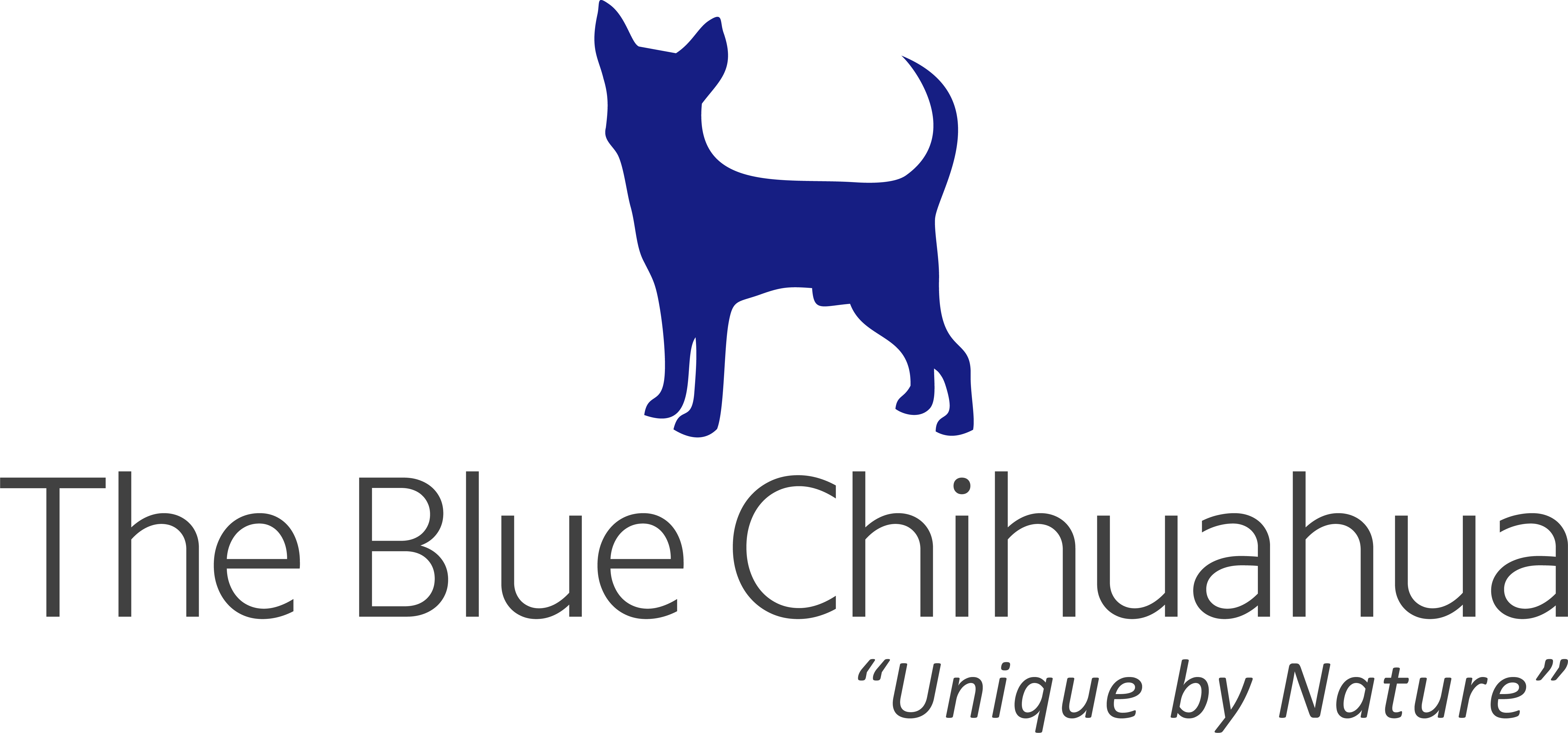 The Blue Chihuahua To Launch Official Website, Prepares Massive Treasure Hunt For Users