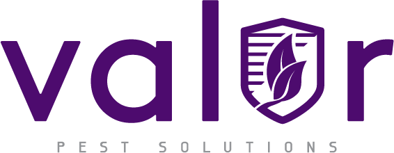 Valor Pest Solutions Has A New Website Featuring Top Pest Control Services For Residents Of St Paul, Minnesota