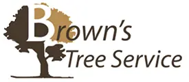 Fort Worth Tree Experts Has Built a New Website Featuring All Tree Services in Fort Worth, TX