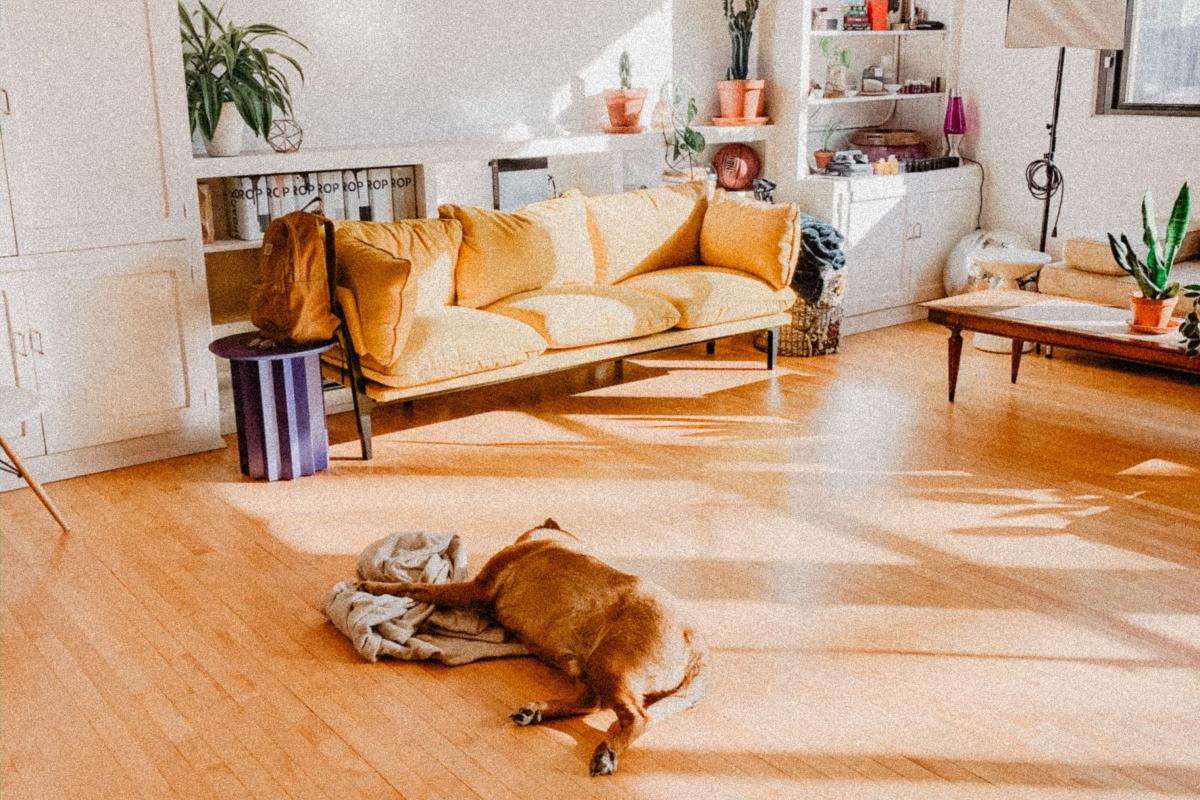 Realtimecampaign.com Explores the Popularity and Benefits of Vinyl Flooring