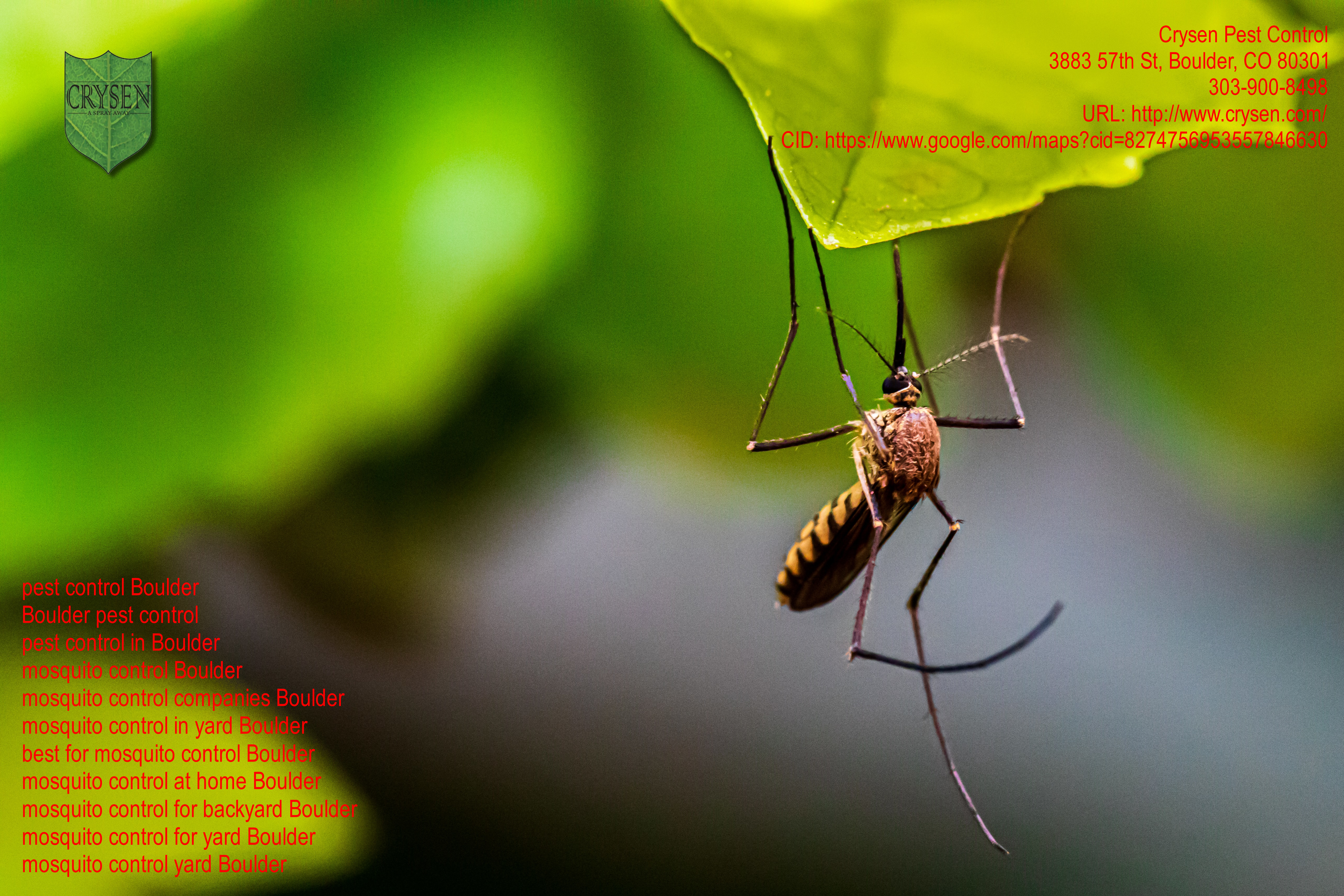 Crysen Pest Control Highlight The Benefits Of Professional Pest Control Services